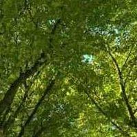 alberi